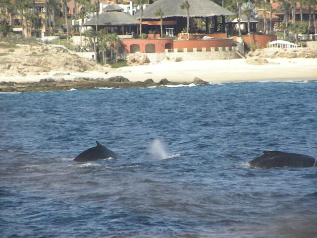 No passeio para ver as Baleias no golfo do Mar Cortez