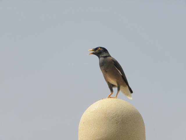 Dubai 1150