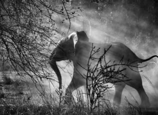 sebastiao-salgado-fotografia-elefante