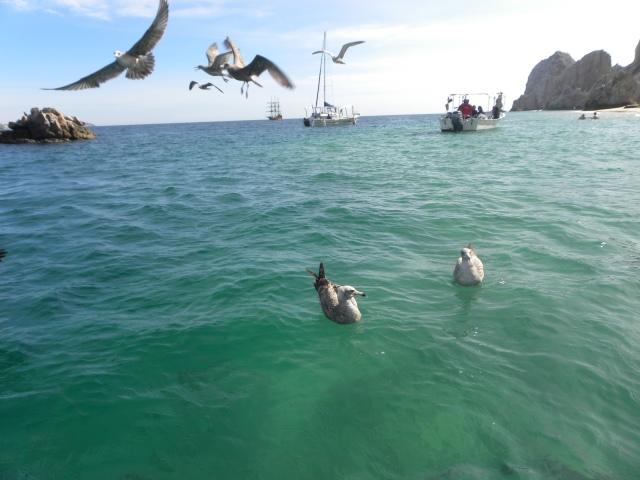 Los Cabos Allure e Miami 036