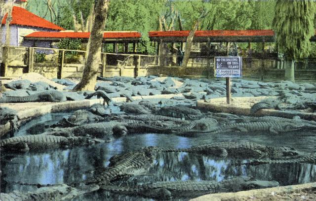 st-augustine-alligator-farm-vintage-postcard-kathy-hunt