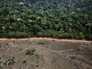 greenpeace_documenta_area_de_desmatamento_no_municipio_de_labrea_no_sul_do_amazonas