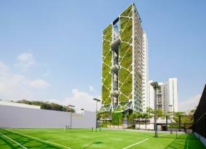 CDL-Tree-House-1